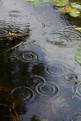 Pond - rain droplets (pix-spotting) Tags: pond rain raindroplets fiskars nature water lily lilies drop waterdrop waterdroplets summer reflection depth weather tree circles