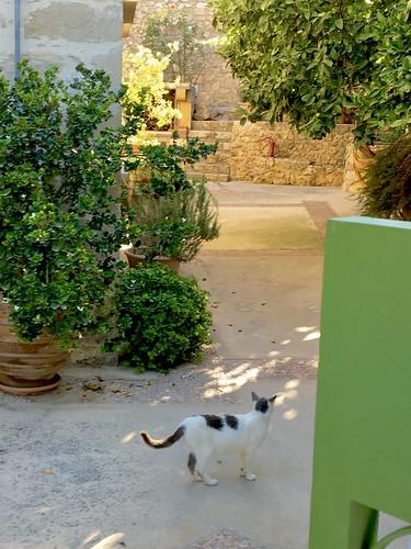 Last view of our honeymoon villa, Siva,Crete
