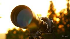 Superzoom 600-1350 @ Sony α77 (Veitinger) Tags: sony veitinger a77 sonya77 zoom superzoom cam kamera dslr camera sunset sonnenuntergang bokeh manual backlihght gegenlicht