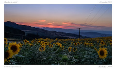Coucher de soleil (BerColly) Tags: france auvergne puydedome paysage landscape sunset coucherdesoleil ciel sky tournesol sunflower puys smartphone samsungs7edge bercolly google flickr