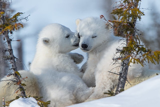 Bear Hugs and Kisses  3I4554