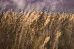 untitled89 (Valeria Rossi Brichese) Tags: blur icm flowers nature colors multiexposure
