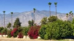 Moving to Texas! First stop Palm Springs (- Adam Reeder -) Tags: fountain y2018 m06 d06 lat340 lon1170 taquitz canyon river estates palm springs riverside california united states photo jpg apple iphone x moving texas first stop swing picketfence carmirror umbrella parkingmeter pot carousel barrow hay tree mountain