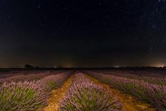 Flores y estrellas. (Amparo Hervella) Tags: brihuega guadalajara españa spain paisaje naturaleza lavanda flor noche nocturna puntodefuga lightpainting color largaexposición d7000 nikon nikond7000