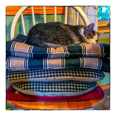The Prince and the Pea (Timothy Valentine) Tags: 2018 0718 cat home quinnomannion eastbridgewater massachusetts unitedstates us