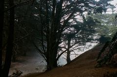 20180724-00042.jpg (tristanloper) Tags: tristanloper creativecommons film nikonf6 california bigsur pacificcoast highway1 pacificocean pfeifferbeach cypress
