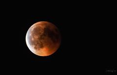Eclipse lunar (David Ruiz Luna) Tags: lunadesangre luna eclipse eclipselunar2018 moon lunareclipse2018 lunareclipse eclipselunar nightscape night noche nightphotography sortidesphototrekking phototrekking camprodón catalunyaexperience catalunya cataluña nochedeverano girona españa spain rocabruna