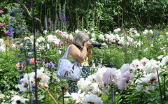 REFORD GARDENS      |  THE LONG WALK  |  PEONIES  | PIVOINES | ALLEE ROYALE |    REFORD GARDENS  |   LES JARDINS DE METIS  |  METIS   |  GASPESIE  |  QUEBEC  |  CANADA (J P Gosselin) Tags: reford gardens | the long walk allee royale les jardins de metis gaspesie quebec canada canon 7d 7dmarkii rebel t2i canonrebelt2i eos canon7d markii rebelt2i canonrebel canont2i eost2i eos7d eos7dmarkii mark 2 mark2 eos7dmark2 canon7dmarkii ii canoneosrebelt2i canoneos7d canoneos ph:camera=canon peony peonies pivoines pivoine