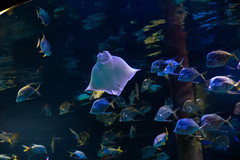 'round the mast (severalsnakes) Tags: missouri pentax saraspaedy tamron287528xrdi wondersofwildlife aquarium k1 springfield zoo zoom