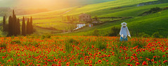 :) (dawvon) Tags: provinceofsiena cypress flare landscape sunset plants nature people poppies mariaresht lady trees tuscany travel house asciano twilight flowers europe italy city dusk halflight italia italianrepublic poppy provinciadisiena repubblicaitaliana siena toscana pienza it