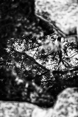 Serralves Reflections - 6 (annie.cure) Tags: atmosphere abstract serralves details water effect reflection texture tree mysterious landscape nature noise blackandwhite monochrome mood porto portugal canon 750d