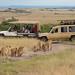 Safari in The Maasai Mara