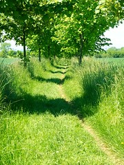 Alley in the field (Yirka51) Tags: alley wood wallpaper tree springtime spring shadow road plant path meadow green grass field flora environment countryside country bush