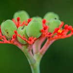 Buds and Depth of Field thumbnail