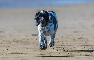 Hugo, Crosby Beach