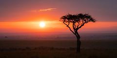 KGB morning sunrise over the Mara.jpg (Darren Berg) Tags: sunrise kenya maasai mara lone color vivid silhouette kgbshot