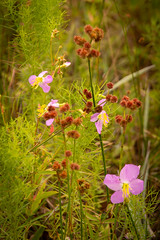 A Natural Bouquet (dlkautz) Tags: floral wildflower seashore nature
