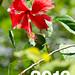 2013 - NAGJOH PHOTO