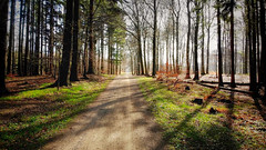 Hareskoven (Katya_N) Tags: hareskovenforest forest denmark light trees pass