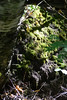 Moss (Vegan Butterfly) Tags: outside outdoor whitemud ravine nature reserve edmonton alberta moss plants forest