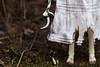 Burned Tree I (AraDolls) Tags: bjd balljointeddoll dollzone renata aradolls doll horror gore