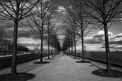 tHE pATH oF bROKEN pROMISES (wNG555) Tags: 2014 newyork newyorkcity rooseveltisland bw fdrfreedompark sony ilce6000 fav25 fav50 fav100