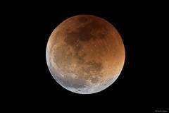 Lunar Eclipse 2018 (Martin_Heigan) Tags: lunar eclipse astrophotography nikon d750 1000mmlens science astronomy southafrica 27july2018 martin heigan astroimaging southernhemisphere bloodmoon redmoon mhastrophoto lensastrophotography stacking celestron avx theearthisnotflat earthssphericalshadowonthemoon earthsshadow flickrexplore earthsshadowonthemoon hdr bracketingexposures focus nightsky nightphotography cameralensastrophotography manualfocus solarsystem planetaryphotography lunarphotography planetarysatellites dslrastrophotography amateurastronomy backyardastronomy longestlunareclipseofthecentury penumbra shadow longwavelenght redpartofthespectrum electromagneticspectrumoflight longredlightwaves penumbraleclipse totaleclipse nikonfx