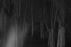 whispers in the moonlight II (Mindaugas Buivydas) Tags: temple lietuva lithunia bw spring march tree trees dark darkness darkside twilight birštonas vytautokalnas vytautashill nemunokilpųregioninisparkas mindaugasbuivydas whiteinblack