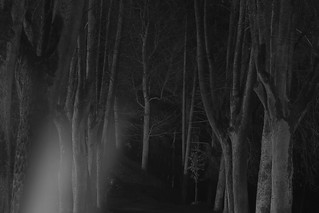 whispers in the moonlight II