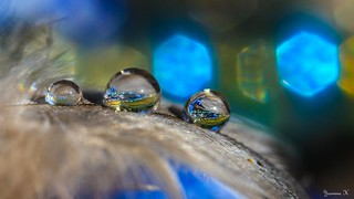 Droplets - 5684