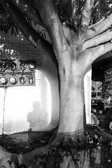 Árbol en mano (Marcos Núñez Núñez) Tags: árbol tree blackandwhite streetphotography bw streetphotographer selfportrait shadow sombra blancoynegro oaxaca tuxtepec piragua muro mano
