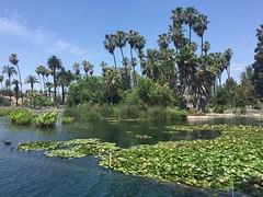 (matthew valencia) Tags: echopark neighborhood losangeles california lake park palmtrees palms buildings fountain 1984olympics southerncalifornia plantings moviefilming tvfilming locations bridge