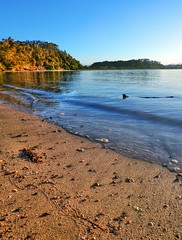 On the island XVI (elphweb) Tags: hdr highdynamicrange nsw australia seaside sea ocean water beach sand sandy brouleeisland island