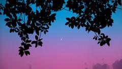 Lo fi sunset (Felix Bodenstein) Tags: mallorca travel beautiful 169 textures nature elemental elementsofnature abstract vapor vaporwave pink blue moon sunset silhouette leaves tree lowfi lofi downtempo chill d90 nikon sigma1770