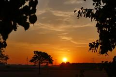 Once More (ivlys) Tags: leeheim hessischesried hessian reed sonnenaufgang sunrise landschaft landscape baum tree himmel sky natur nature ivlys