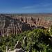 Badlands Beyond the Trees at Pinnacles Overlook (Badlands National Park)