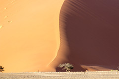 Close (Beppe Rijs) Tags: hardap namibia natur sossusvlei afrika africa desert wüste landscape landschaft rock fels berge color farbe abstrakt abstract yellow gras nationalpark nature np namib dune düne sand orange red tree baum