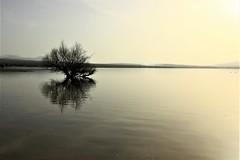 Pantano de Santillana (Deniel T) Tags: arbol agua santillana manzanares cielo reflejos pantano sauce
