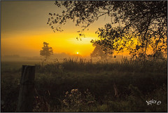 Memorable Moments... (Picture post.) Tags: landscape nature green sunrise trees thistles post mist paysage arbre magic moments