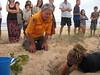 Bongil Turtles Excavation_2018 045 (OEHmedia) Tags: npws oeh conservation greenturtle nest threatenedspecies nswnationalparksandwildlifeservice
