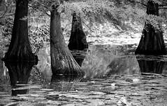 Nasse Füße - Foot Bath (Bernd Kretzer) Tags: bäume trees wasser water schlospark dennenlohe