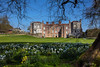 """Mottisfont Abbey and Country Estate (clive_metcalfe) Tags: """"nationaltrust"""" mottisfont horticulture narcissus daffodils sunnyday bluesky sunny lawn mown romsey timsbury hampshire uk"""
