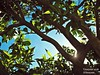 Sunshine (Linayum) Tags: sunshine nature naturaleza tree árbol spring primavera sky linayum green verde