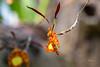 Butterfly Orchid (khurtwilliams) Tags: butterfly dukefarms greenhouse hillsboroughtownship orchiddukefarmshillsboroughunitedstateofamericaus