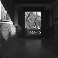Coming - Film Hasselblad (Photo Alan) Tags: film hasselblad hasselblad503cw carlzeissplanar80mmf28 blackwhite blackandwhite 220 filmcamera filmscan filmstreet china beijing shadow shadowplay