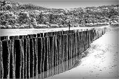 """""""Sophie se promenant sur les pieux"""" La plage et la mer du Nord à Dombourg, Walcheren, Zeelande, Nederland (claude lina) Tags: claudelina nederland paysbas hollande zeeland zélande dombourg domburg plage beach dunes mer sea merdunord noordzee piquets poteaux"""