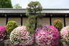 Flower ball (Teruhide Tomori) Tags: 京都 日本 西本願寺 ツツジ 寺院 花 春 木造建築 architecture construction wall kyoto japan japon azalea flower spring tree nishihonganji temple