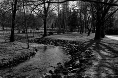 rivulet (boriskombol) Tags: bw bnw bn blackandwhite blancoynegro biancoenero nb noiretblanc sw schwarzweis cb crnobijelo monochrome mono monotone monocromatico monocromo canon 6d ef40 pancake landscape landschaft paisaje paysage natur naturaleza nature arbres árboles trees bäume arroyo creek bach ruisseau pont bridge brücke puente outside outdoor