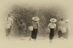tornando a casa (mat56.) Tags: persone people donne women lavoro work pindaya myanmar burma birmania asia strada street bianco black nero white antonio romei mat56