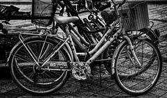 The Visitor (Leaning Ladder) Tags: novisad serbia bicycle blackandwhite bw street canon 7dmkii leaningladder